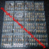 Recycle PVC Clear Plastic 6 Egg Cartons for Quail