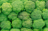 Chinese IQF Frozen Broccoli for Exporting