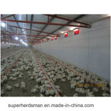 Factory Supply Broiler Poultry Farm Equipment Chicken Feeding Line Equipment