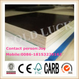 Hot Sell Film Faced Plywood/China Supplier/Construction Material