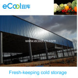 Large Size High Capacity Low Temperature Cold Storage for Vegetables and Fruits Fresh Keeping