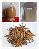 Cordyceps Extract with High Quality on Sell