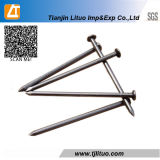 Common Wire Iron Nails Wooden Nail Clavo Comun