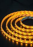 LED Striplight Waterproof SMD5050 LED Supply for Decoration Lighting