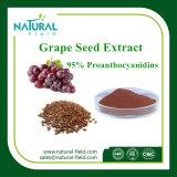 100% Pure Herbal Extract Grape Seed Extract Procyanidine 95% Powder