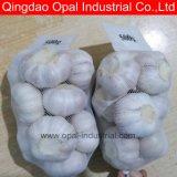 New Crop China Garlic Exporter Fresh Normal White Garlic Price