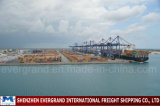 Shenzhen Sea Freight Shipping to Algeria