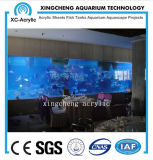 Plexiglass Acrylic Sheet Aquarium for Restaurant Project