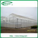 Multi-Span Film Greenhouse with filx roof vent