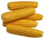 China Origin Dried Maize/Corn