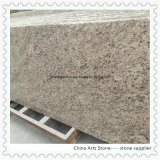 Giallo Ornamental Granite Slabs for Countertops and Tiles