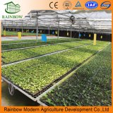 Greenhouse Drip Flower Water Saving Irrigation System