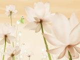 Flower UV Sheet for Kitchen Cabinet Door (ZH-A146)