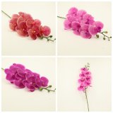 Wholesale Real Touch Orchid Spray Flowers Decorations Gfq-015