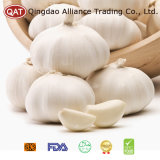 New Crop Garlic with High Quality