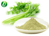 Organic Celery Extract Powder with Apigenin