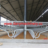 Cow Farm Steel Pipe Cow Free Stall