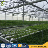 9.6m Multi Span Plastic Film Greenhouse for Hydroponic System
