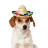 Dog Sombrero Hat, Mini Straw Sombrero Hats Mexican Hats Sombrero Party Hats for Small Pets/Puppy/Cat Esg12527