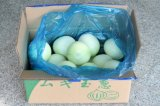 High Quality Fresh Yellow Onion with Competitive Price 2020