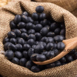 China Supplier Black Kidney Beans