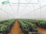 Simple Plastic Tunnel for Seeding
