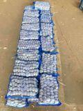 Wholesale Fresh Garlic to Middle-East Market