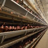 Good Price Automatic Poultry Farm Equipment Chicken Battery Cage