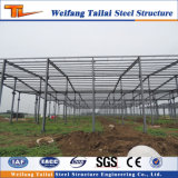 Multi Span Steel Structure Plant