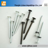 Ring Shank Nail Annular, Electric Galvanized