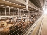China Best Price Poultry Equipment Layer Broiler Chicken Cage