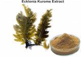 High Standard Plant Polysaccharides Ecklonia Cava Extract Powder