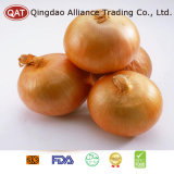 Chinese Fresh Yellow Onion with Competitive Price