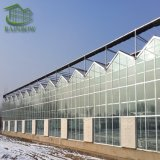 Venlo Hollow Double Tempered Glass Greenhouse with Hydroponics Growing System for Vegetables/ Flowers/ Tomato/ Farm/ Garden/ Eco Restautant / Agriculture