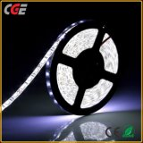 High Quality SMD 5050 Waterproof LED Rope Plant Grow Light Strip Lighting / 12V DC LED Strip Light Warm White/White