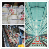 Automatic Layer Cage System/Livestock Machinery with Drinker System