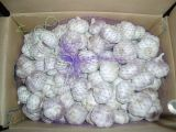 Chinese Normal White Garlic (4.5cm and up)