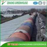 Professional Film Covered Environmental Friendly Solar Green House with Quilt and Earthen Back Wall for Anti-Season Vegetable/Flower Cultivation