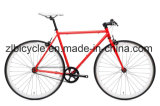 Lifestyle Hi-Tensile Steel Single Speed Fixie Bicycle