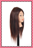 100% Human Hair Lesson Head 16inches for Beauty School Training