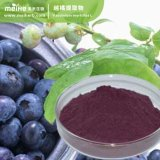100% Natural Bilberry Extract