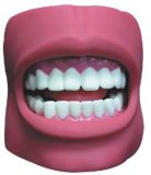 Xy-K4 Dental Care Model (with Cheek)