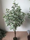 High Quality of Artificial Plants Ficus Tree Gu1468052158559