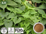 High Quality Foti Extract Glucoside 2%, 10: 1 12: 1