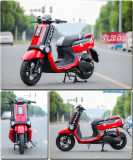 Scooter Ecool