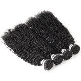 Wholesale Price Kinky Curly 100 Natural Brazilian Virgin Human Hair with Hair Bundles & Hair Weaving Weft