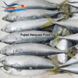 Exporting Sea Frozen Food Pacific Mackerel