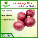 Exported Fresh Red Onion to Dubai with High Quality