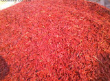 New Crop Fresh Export Vegetable Good Quality Red Chili