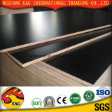Melamine Glue Film Faced Plywood for Construction